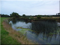 SZ1394 : Jumpers: the Stour behind River Way by Chris Downer