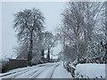 TF4208 : Station Road, Wisbech St Mary by Richard Humphrey