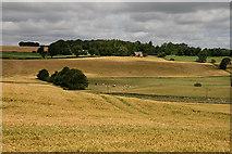 NT6244 : A barley field near Stock Bridge by Walter Baxter