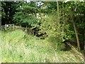 SE7858 : Bridleway near Bugthorpe Beck by Dr Patty McAlpin