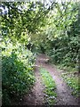 SE9457 : Green Lane near Wetwang by Dr Patty McAlpin