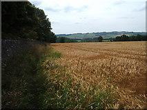 SK2171 : Barley field beside Long Rake Plantation, Hassop by Peter Barr
