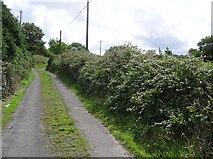 G7756 : Country lane, Wardhouse by Kenneth  Allen