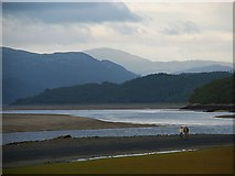 SH6214 : An evening walk on the shore of the Mawddach estuary by Patrick Mackie