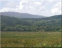 NR4652 : Scrubby rough meadow with native woodland beyond by C Michael Hogan