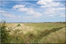 TQ9293 : Towards Paglesham Creek by Glyn Baker