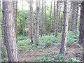 NZ2153 : Hellhole Wood by brian clark