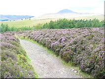 NO2206 : East Lomond Path by Colin Smith