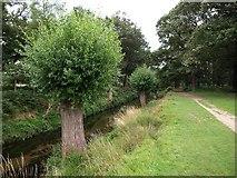 TQ2173 : Beverley Brook by Derek Harper