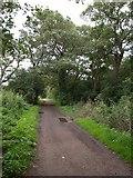 TQ2172 : Path at Kingston Vale by Derek Harper