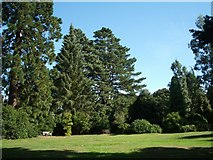 SU5598 : Nuneham Courtenay Arboretum by Keith Salvesen