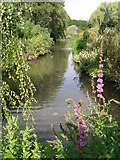 TQ2882 : Pond in Queen Mary's Gardens by Peter S