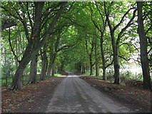 SO5563 : Avenue Of Trees En Route To Leysters by Peter Whatley