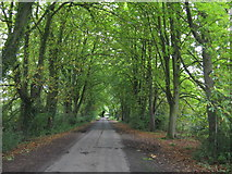 SO5563 : Avenue Of Trees Near Leysters by Peter Whatley