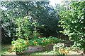 NZ2064 : Scotswood Community Garden by hayley green