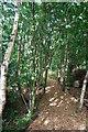 NZ2064 : Woodland path, Scotswood Community Garden, Newcastle upon Tyne by hayley green