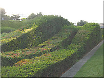 TQ4179 : Thames Barrier Park: topiary by Stephen Craven