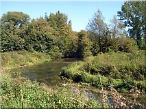 SU4828 : River Itchen at Ridding Meads by James Hardiman