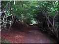NZ4238 : Footpath heading into Castle Eden Dene by Roger Smith