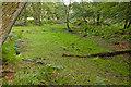 SU2606 : Warwickslade Cutting: original stream bed by Peter Facey