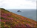 SW7051 : Late summer colour on Newdowns Head by Rod Allday