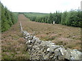 NT3532 : Heather and forest, Minch Moor by Jim Barton