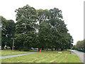 SK5036 : Mature trees, Inham Nook by Alan Murray-Rust