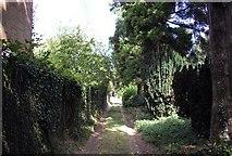 TR2656 : Footpath at The Street Staple by PAUL FARMER