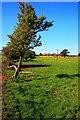 NZ4501 : Summerfield Farm From the East by Mick Garratt