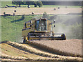 ST6861 : Corn Cutting in Somerset by Rick Crowley