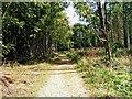 SO8066 : Path through Shrawley Wood by P L Chadwick