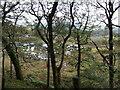 SH6742 : Wetlands at the big loop at Dduallt by Richard Hoare
