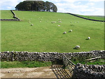 SD8172 : Hilltop wood near the Pennine Way at Horton in Ribblesdale by Chris Wimbush