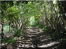 NS0964 : Woodland path by Jim Smillie