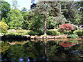 TG0634 : Trees by water, Stody Lodge Plantation by Martin Thirkettle