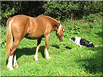 TM3898 : Horse and hound - a friendly encounter by Evelyn Simak