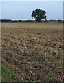 TA1344 : Fields near Cobble Hall, Catwick by Paul Harrop