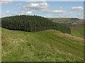 SN7675 : Forestry on Lan Lwyd by Nigel Brown