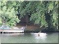 SU6376 : Pillbox under the branches by Bill Nicholls