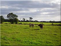 J2369 : Cattle at Mullaghglass by Dean Molyneaux