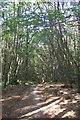 TQ6935 : Footpath in Kilndown Wood by David Anstiss
