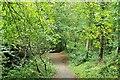J3369 : Belvoir forest, Belfast (2) by Albert Bridge