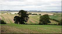 TF2198 : Thorganby fields by Kate Nicol