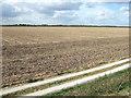 TF6024 : Farmland at Vinegar Middle, north of King's Lynn by Richard Humphrey