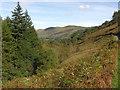 SH8715 : Hillside south of the Afon Dyfi by Nigel Brown