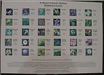 ST8992 : Wildflower Guide St Mary's Church Tetbury. by Paul Best