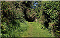 J3370 : The Lagan Meadows walk, Belfast (13) by Albert Bridge