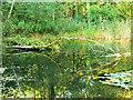 SU1789 : Lake, Stanton Park, Swindon by Brian Robert Marshall