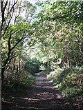 TQ1952 : Bridleway on Headley Heath by don cload