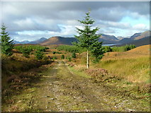 NH1804 : Track in Bunloinn forest by Dave Fergusson
